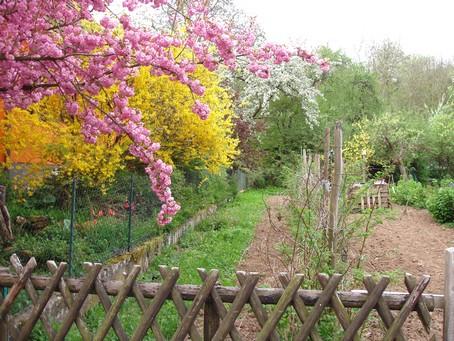 Printemps au gite en alsace - Greffe du cerisier au printemps ...