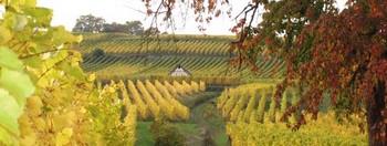 Vignoble de Dorlisheim à coté du gîte à l'automne