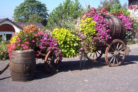 Mutzig Les Geraniums En Alsace